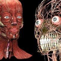 Dental students get 3D training